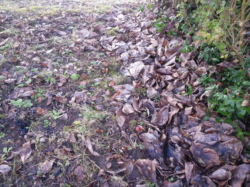 Grenchen Blätter