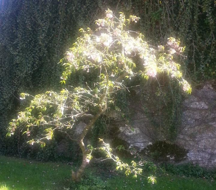 Leuchtender Baum 3 links