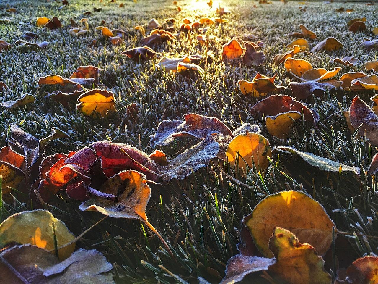 leaves-591191_1280